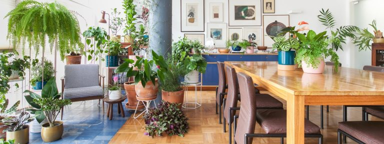 7 plantas que atraem energias positivas