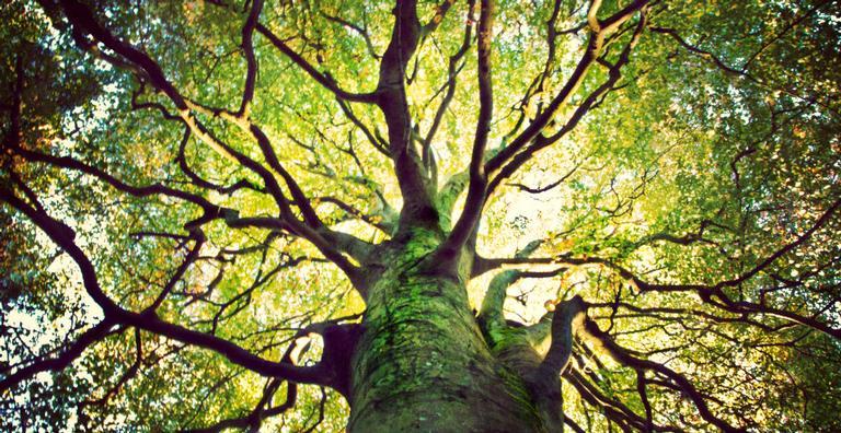 Pistas de mil anos de atividade do sol estão escondidas nas árvores da Terra