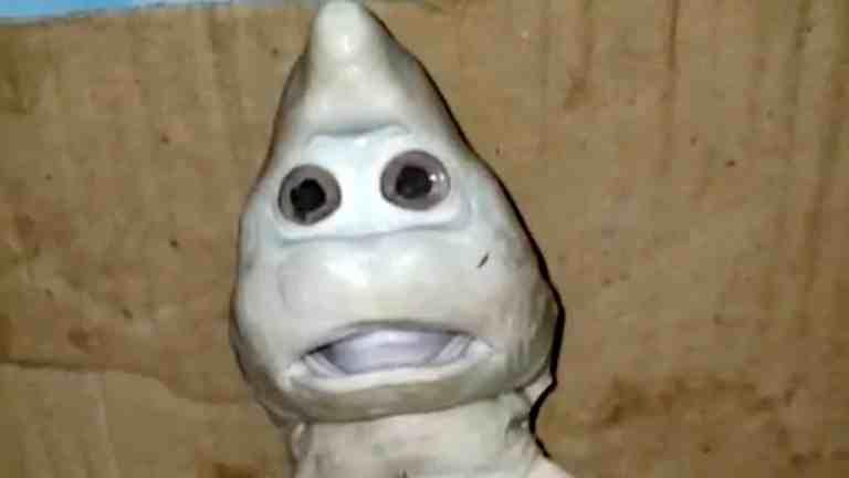 Tubarão com rosto humano é encontrado na Indonésia