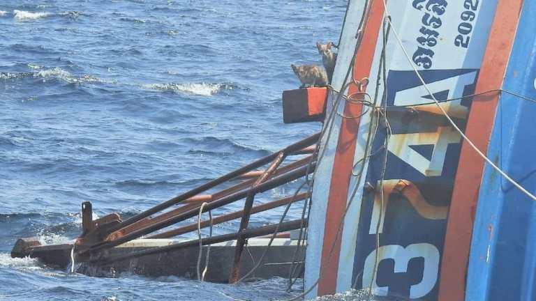 Marinha Real da Tailândia resgata gatos de navio que estava naufragando