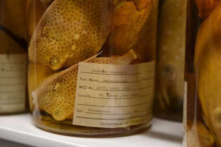 Cientistas se unem para registrar coleções de espécimes na Internet