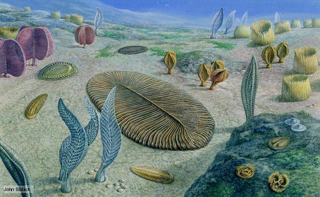Humanos tem semelhanças incríveis com criaturas estranhas de 550 milhões de anos atrás