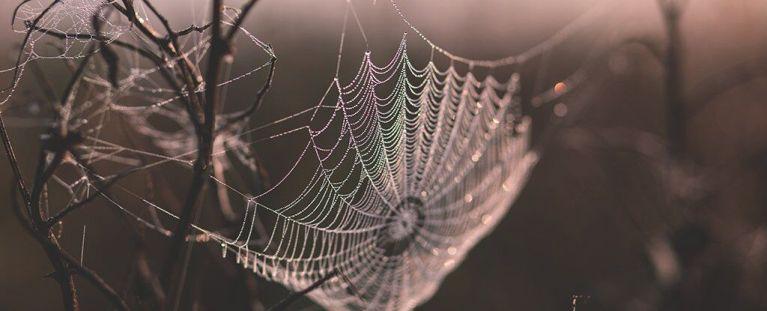 Cientistas traduziram teias de aranha em música e o resultado é impressionante