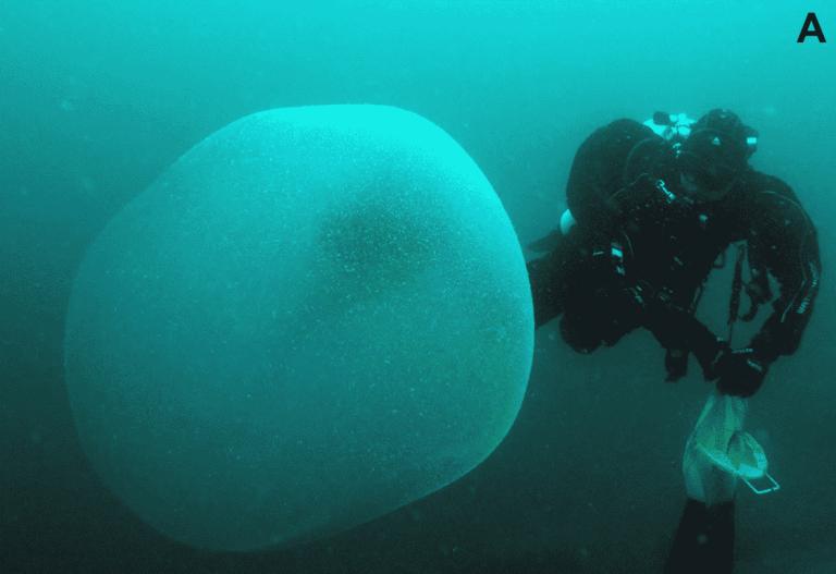 Mergulhadores descobrem bolhas marinhas gigantes