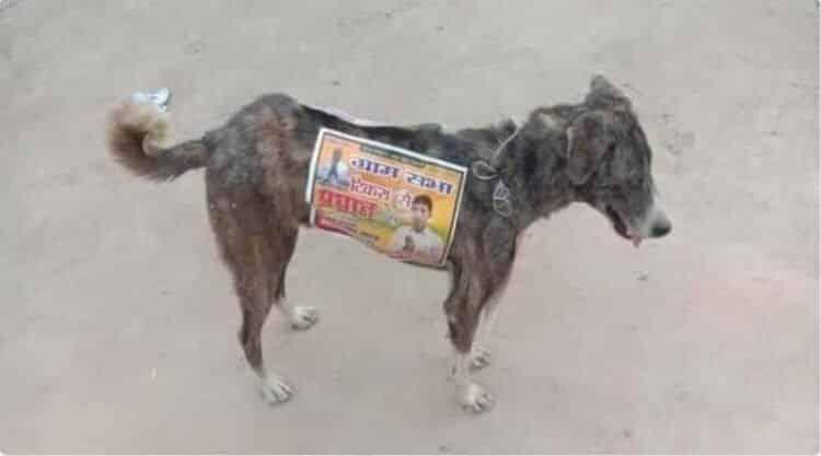 Políticos da Índia utilizam cães de rua para fazer publicidade