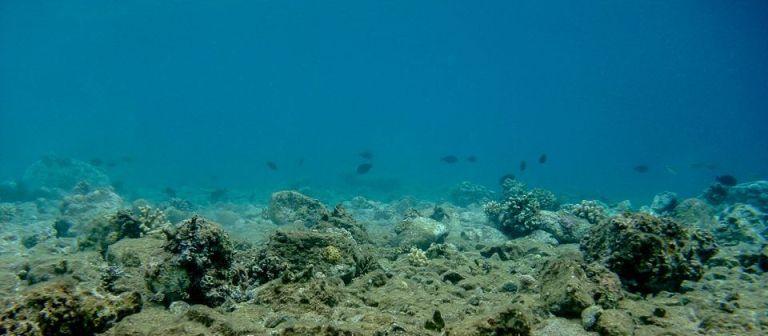 Oceanos podem ficar sem peixes até 2048