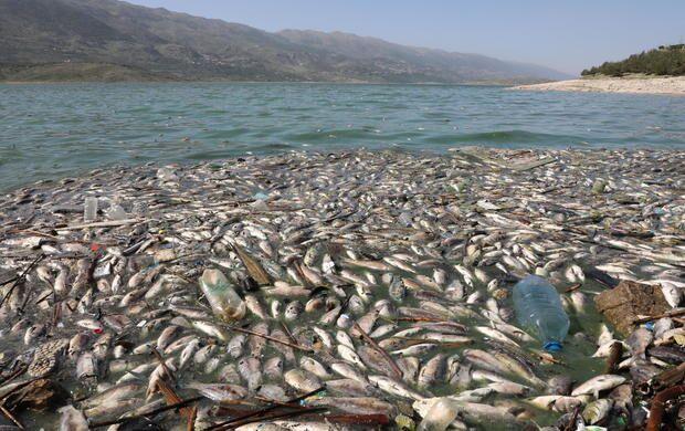 Toneladas de peixes mortos aparecem nas margens do Lago Qaraoun, no Líbano