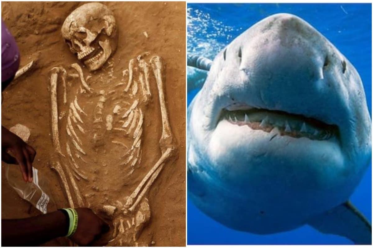 Esse fóssil de três mil anos revelou a vítima mais antiga de um tubarão