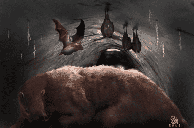 Morcego3, Fatos Desconhecidos