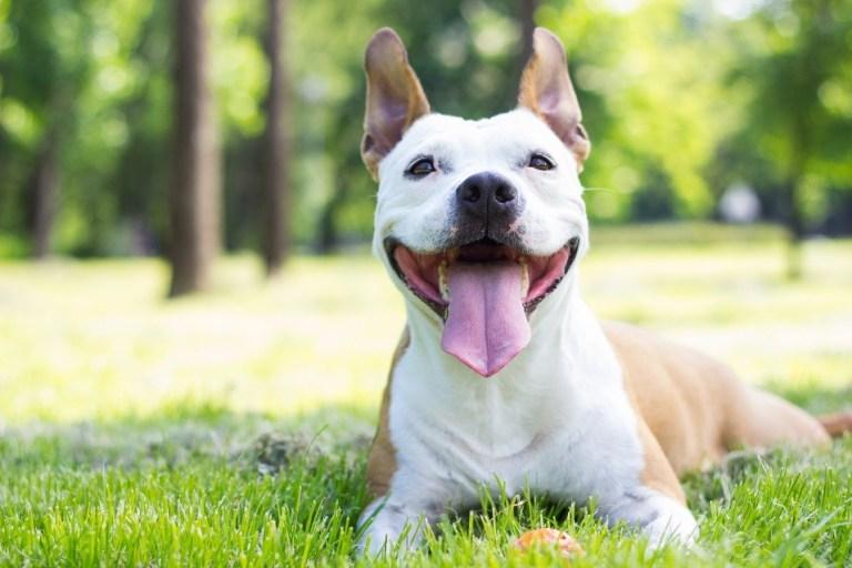 5 coisas que vão ajudar seu cachorro ter uma vida mais longa e saudável