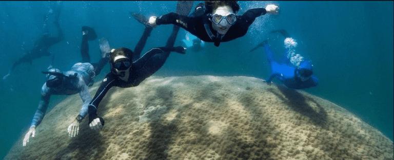 Coral de 400 anos é o maior já visto na Grande Barreira de Corais