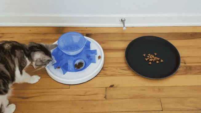 Gato1, Fatos Desconhecidos