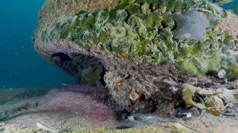 Seis novas espécies bizarras de esponjas foram produzidas no mar profundo perto da Nova Zelândia