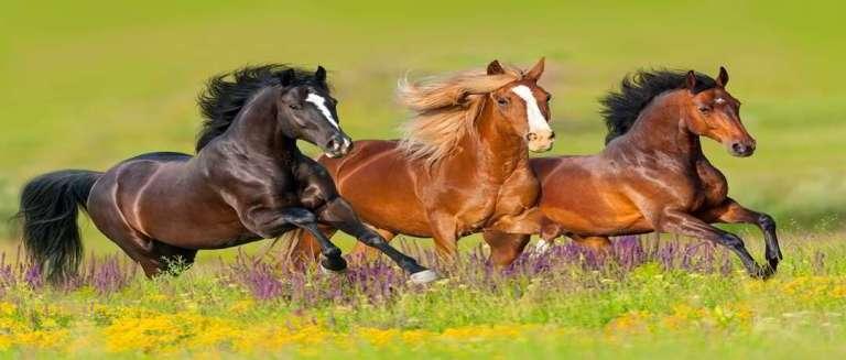 Estudo revelou de onde veio o ancestral dos cavalos modernos