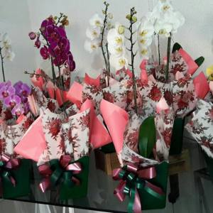 floricultura flora samambaia nova odessa fatos e eventos