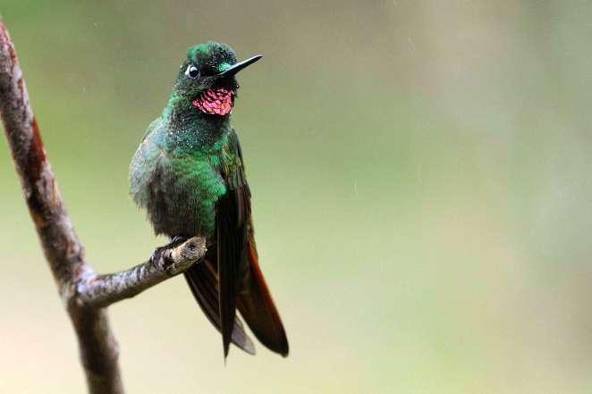 A exuberante beleza dos beija-flores em detalhes na natureza fatos e eventos (2)