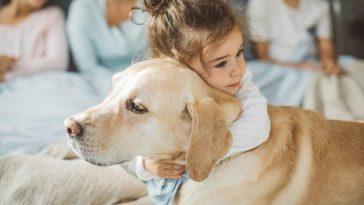 Animais também podem ajudar no tratamento de doenças fatos e eventos (9)
