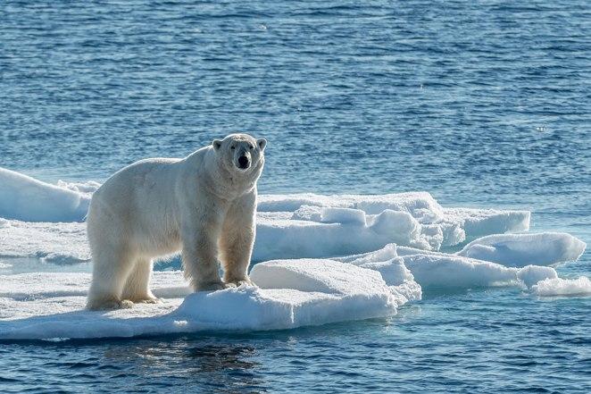 curiosidades sobre o Polo Norte nova odessa fatos e eventos