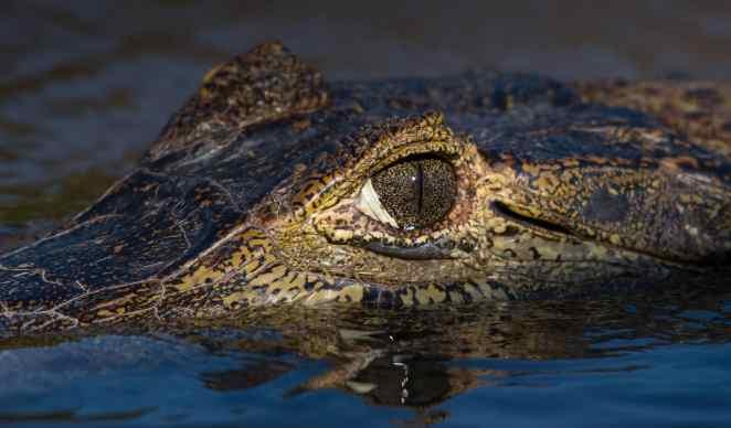 Animais do Pantano nova odessa fatos e eventos (3)