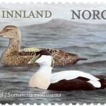 2015-10-25-ærfugl-frimerke