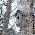 1613px-Nesting_Box_(181545903)