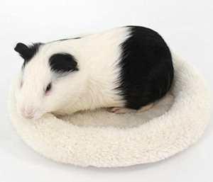 Kunwei Doux Hamster Lavable Couchage lit Mini Pet Tapis Coussins Coussinets–Beige