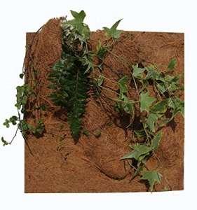 REPTILES PLANET Décor de fond en coco pour terrarium pour planter 20 X 30 X 1 cm