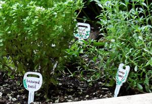 Manquant Plant Markers clés