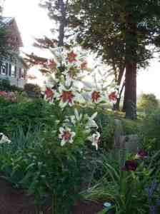 garden-tour-12-500