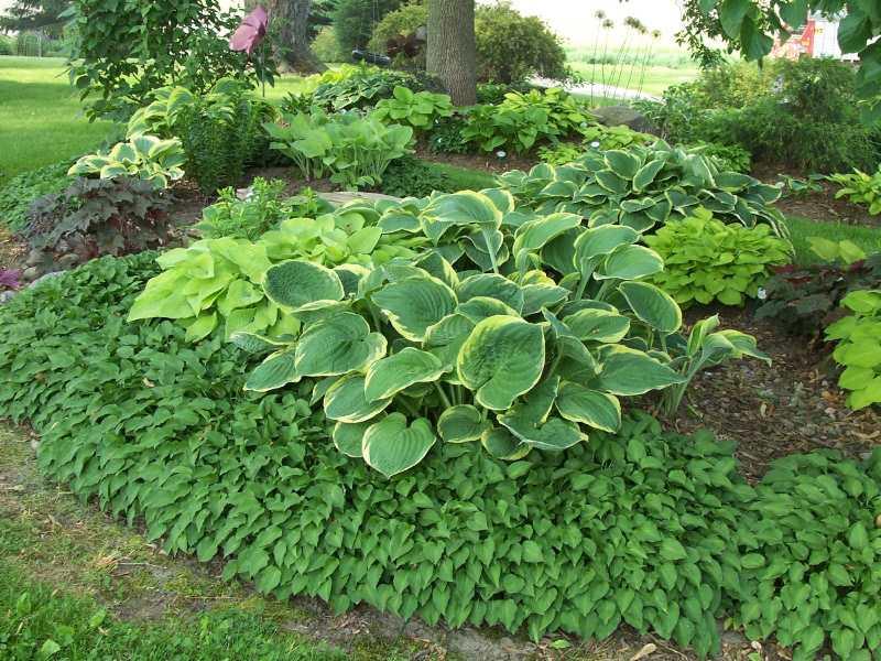 design ideas hosta gardens