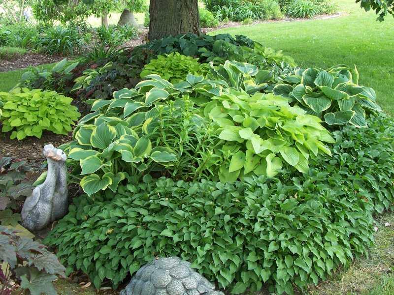 Design Ideas For Hosta Gardens Favorite Perennials