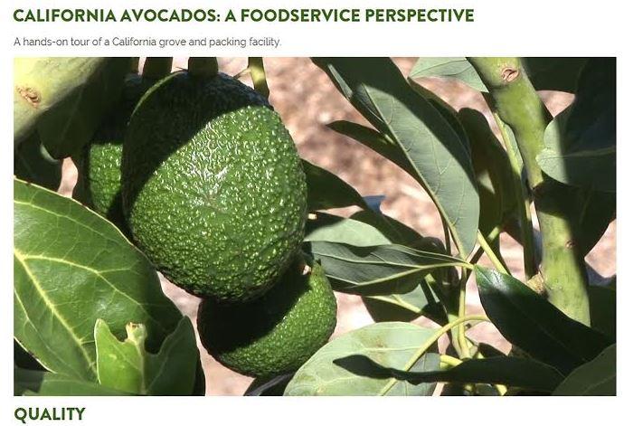 California Avocados - a Foodservice Perspective