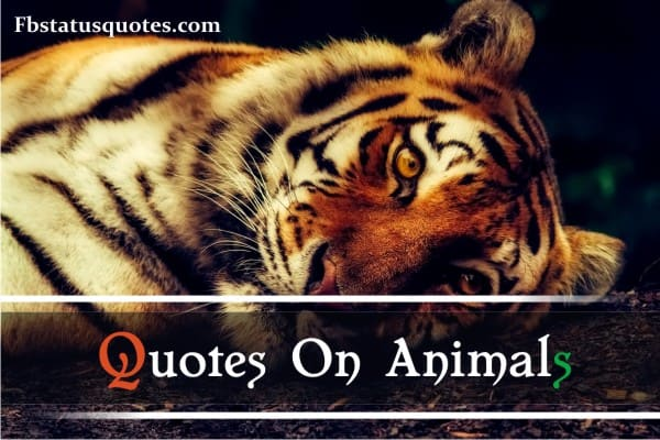Quotes On Animals