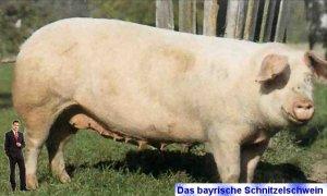 das_bayrische_schnitzelschwein