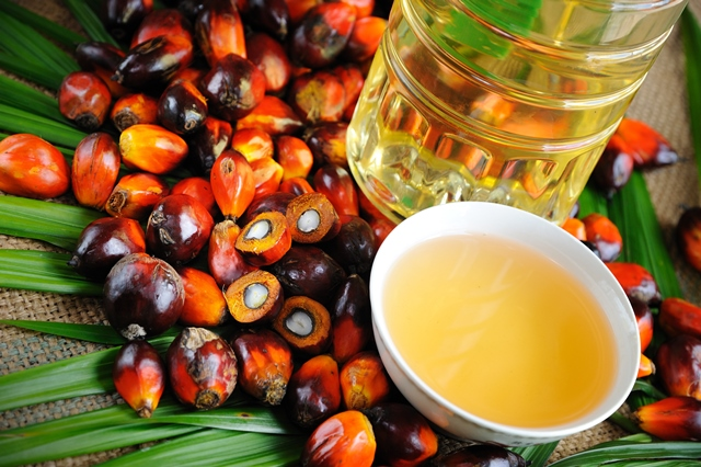 Wilmar leads charge for palm oil's deforestation-free future