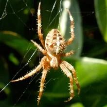 Fear of Spiders Phobia - Arachnophobia