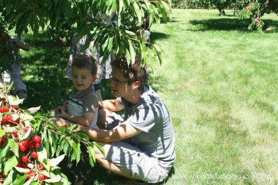 Cody and Johnny Picking Cherries