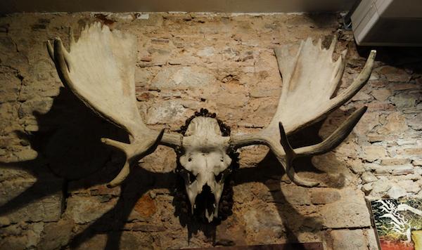 Mammoth Deer