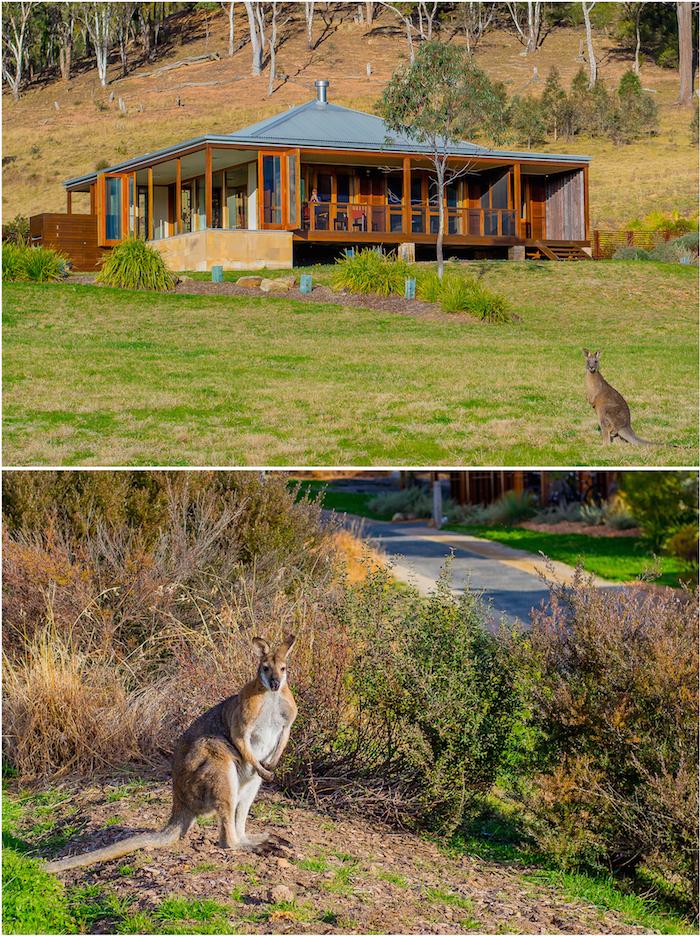 Emirates Wolgan Valley Kangaroos on Property