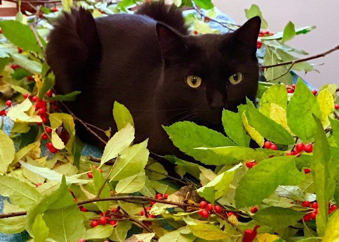 Fall Dinner Party - Cat