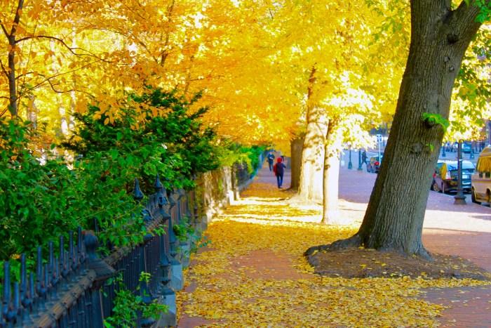 5 Must-Visit Boston Neighborhoods