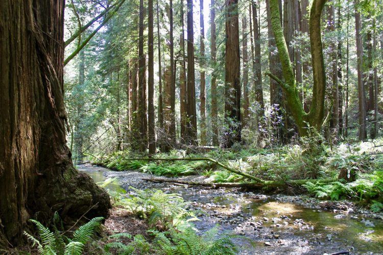 Day Trips Near San Francisco: Muir Woods & Vista Point | Feather & Flint