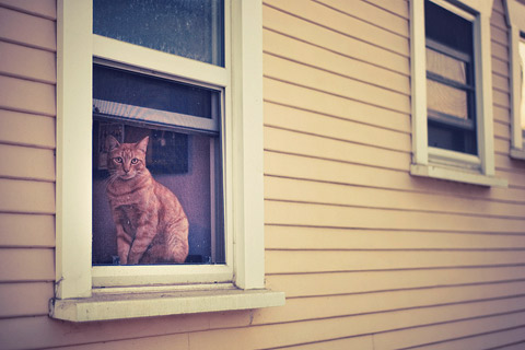 Rachel-Bellinsky pets in windows photos