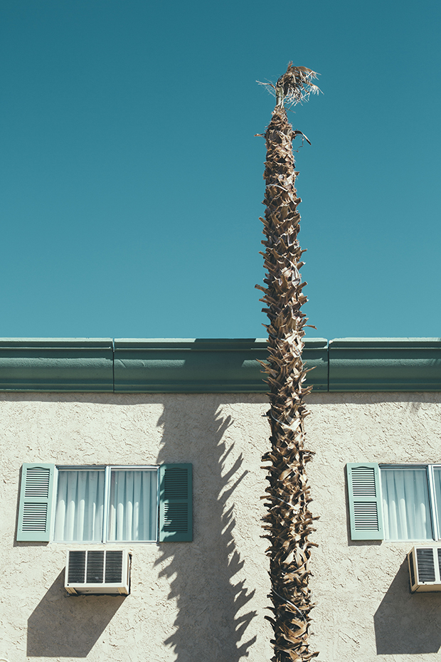 Palm tree and hotel exterior, Death Valley NP, CA