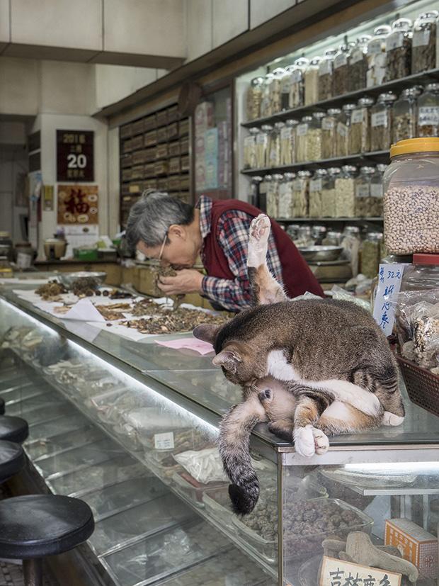 m-heijnen-hk-shop-cats-18