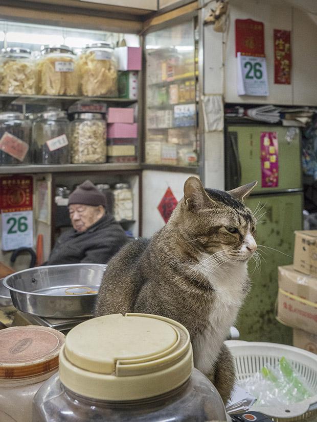 m-heijnen-hk-shop-cats-19