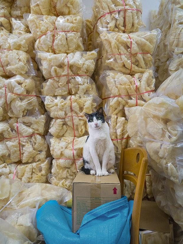 m-heijnen-hk-shop-cats-25