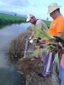 04. Realización de hoyo con el plantador.