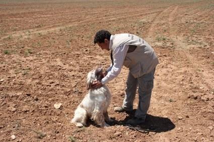 Imagen de un curso de Adiestrador de Perros de Caza
