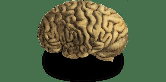 El cerebro humano clave en el neuromarketing